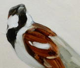 Sparrow, Chitwan National Park painting by Esther Tyson